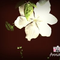 AnnaB :: Анна Y-Blare
