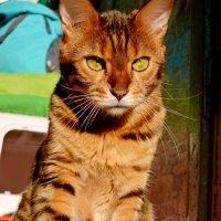 солнечный кот :: АННЕТТА ФОТОМОДЕЛЕЛЮБИТЕЛЬ