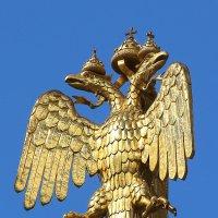 орел :: Laryan1