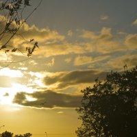 ладони в небе :: Елена