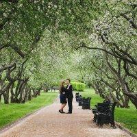 Цветение яблонь в Коломенском :: Алена Шпинатова