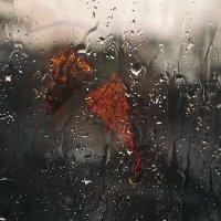 Дождливая осень :: Сергей Обыкновенный