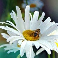 Цветы :: Анастасия Бущик
