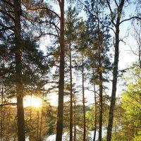 В лесу :: Юрий Кольцов