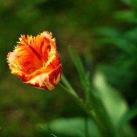 Природа вокруг нас :: Любовь Леонова