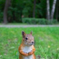Ну и долго мне орехов ждать? :: Alex Bush