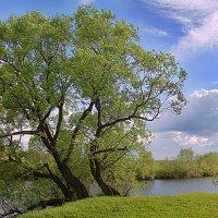 У реки после дождя :: Эркин Ташматов