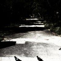 Сбившись с пути :: Катерина Чебышева