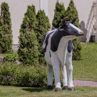 любила корова газоны... :: gribushko грибушко Николай