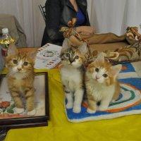 кошачья семейка :: Олег Платонов