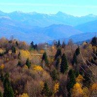 Осень :: Юлия Бабитко