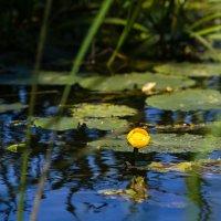 Желтые цветы :: Маруся Шитова