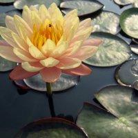 Солнечный цветок. :: Владимир Плотников