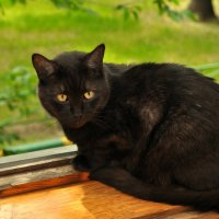 Мой кот Кузьма. :: Виталий Виницкий