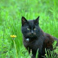 Кошка и одуванчик :: Игорь Попов