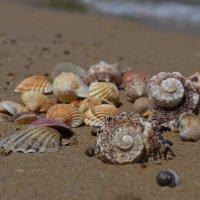 Морские прогулки :: Таня Фиалка
