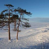 Северодвинск. Разные дни у Белого моря. Две парочки на берегу :: Владимир Шибинский