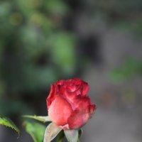 Цветочный хоровод-132. :: Руслан Грицунь