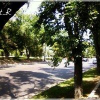 Дорога к парку :: maxim