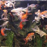 Рыбки :: Альбина