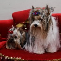 собака друг человека :: Виктор Николаев