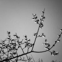 была весна :: Лара Leila