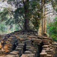 Дерево выросшее на камнях.Камбоджа :: Евгений Подложнюк