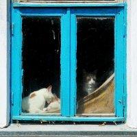 кошачий дом :: Вадим Виловатый