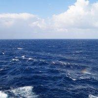 Попалась, маленькая радуга! :: Natalia Harries