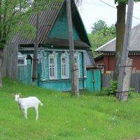 Провинциальная картинка :: Татьяна Латышева