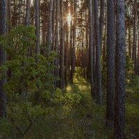Кусочек солнца в лесу. :: Юрий Клишин