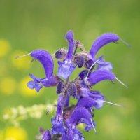 Летние цветы 01 :: morgo
