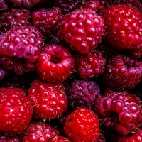Raspberries :: Виктория Шевцова