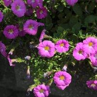 Цветочный хоровод-140. :: Руслан Грицунь