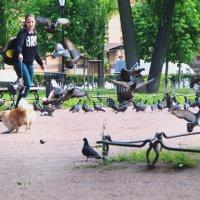 охота на голубей) :: Марина Апрельская