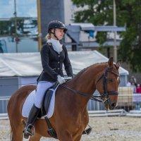 Выступление лошадей на вднх :: Дмитрий Сушкин