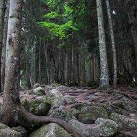 загадочный лес :: Алина Фаизова