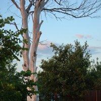 Убеленное временем дерево. (Фрагмент) :: Татьяна Кудрина