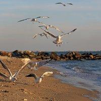 Чайки и море :: Нилла Шарафан