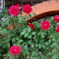 Розовое царство :: Нина Корешкова
