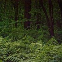 вечер в лесу :: Денис Масленников
