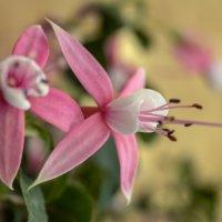 цветок :: Дмитрий Потапкин