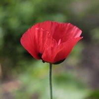 Цветочный хоровод-142. :: Руслан Грицунь