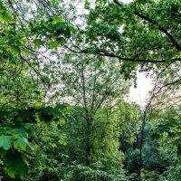 В лесу :: Sergey Sergaj