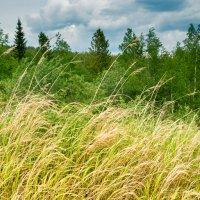 И снится нам трава, трава вдали от дома :: Андрей Пугачев