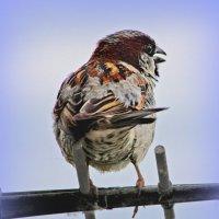 Из жизни птиц. Чик-чирик. :: TATYANA PODYMA