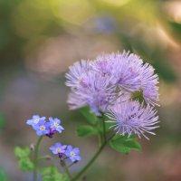 Лесная флора :: Виктор Берёзкин