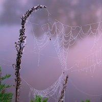 Паутинка в тумане :: Валерий Лазарев