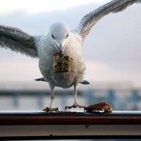 чайка :: vasya-starik Старик