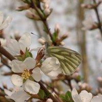 Бабочка :: Николай Филоненко